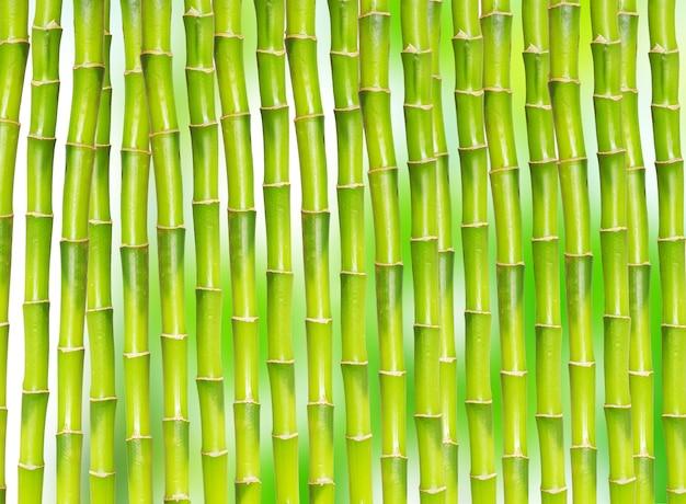 Piękny bambus na białym tle na zielonym tle