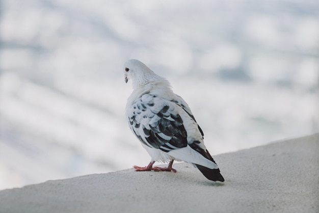 Piękny biały gołąb na balkonie