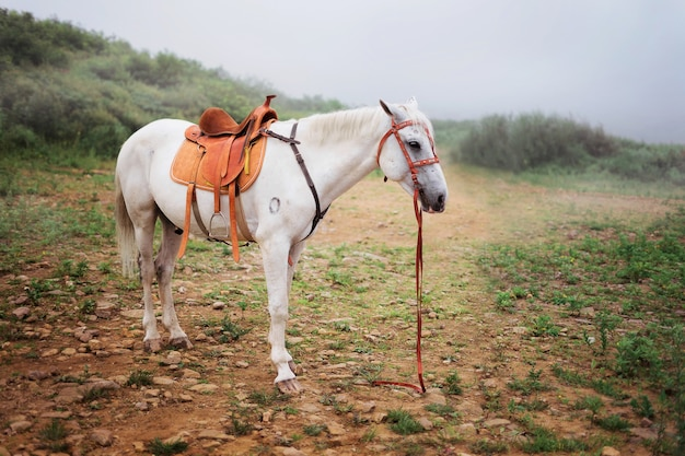Piękny biały koń bez jeźdźca na drodze w mglistym polu.