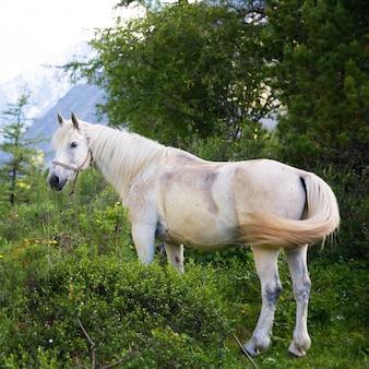 Piękny biały koń w lesie.