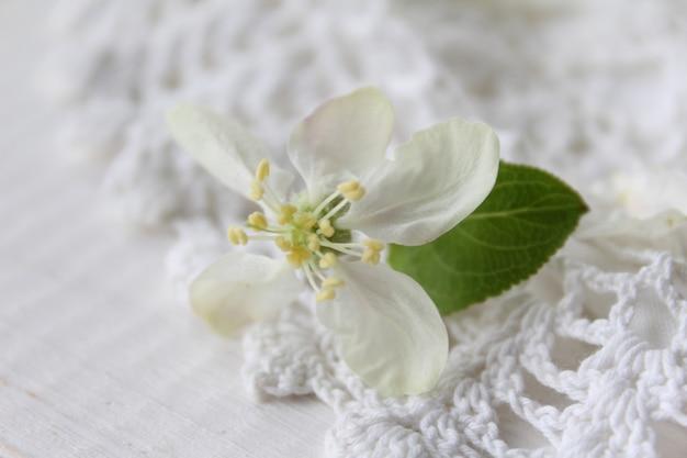 Piękny biały kwiat jabłoni ogród