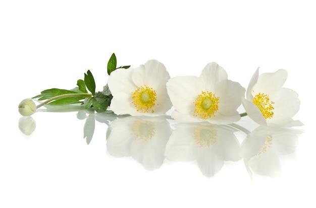 Piękny biały kwiat na białym tle