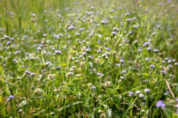 Piękny Biały Kwiat Pole Premium Zdjęcia