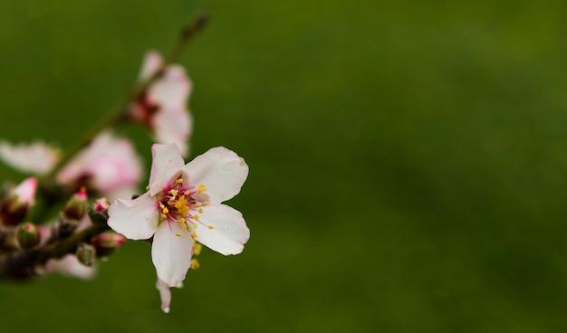 Piękny biały kwiat w drzewie
