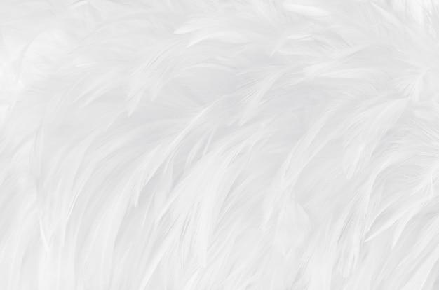 Piękny biały szary ptasich piórek tekstury tło.