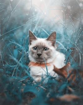 Piękny brązowy kot syjamski z niebiesko-zielonymi oczami leży na zielonej trawie i liściach