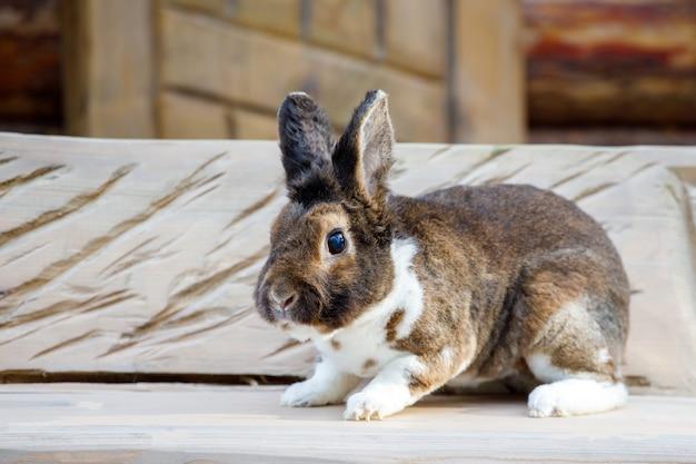 Piękny brązowy królik siedzący na ławce we wsi