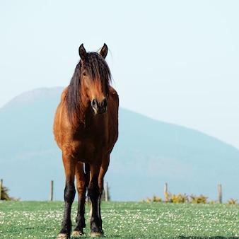 Piękny brązowy portret konia