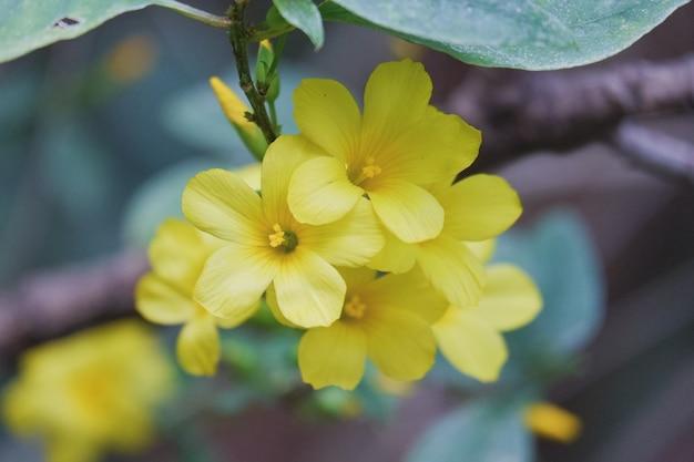 Piękny brigh żółty kwiat kwitnący zbliżenie