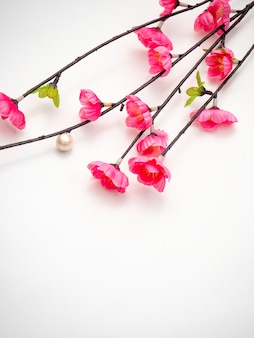 Piękny brzoskwini okwitnięcie odizolowywający na bielu