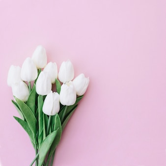 Piękny bukiet białych tulipanów na różowym tle