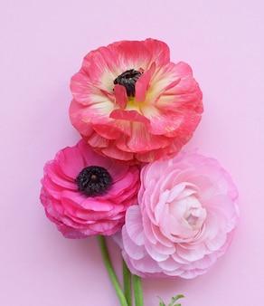 Piękny bukiet kolorowych kwiatów jaskier na różowej powierzchni