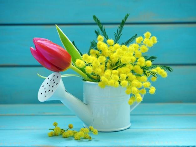 Piękny bukiet kwiatów mimozy i tulipanów na niebieskim tle. wiosna.