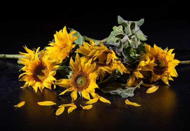 Piękny bukiet słoneczników na czarnej powierzchni.