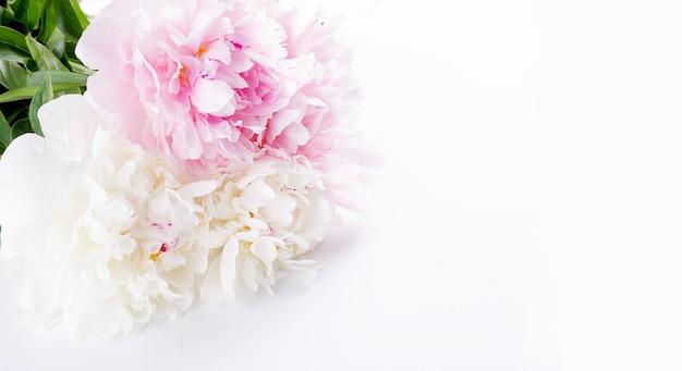 Piękny bukiet światła różowe i białe piwonie zbliżenie na białym tle