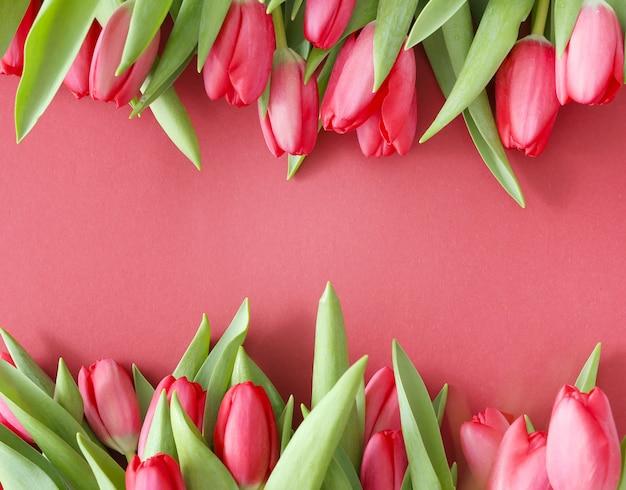 Piękny bukiet tulipanów na różowym tle