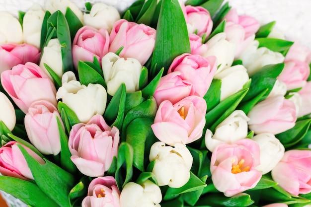 Piękny bukiet wiosennych świeżych i delikatnych kremowych tulipanów, różowy, biały.