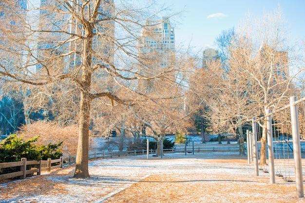 Piękny central park w nowym jorku