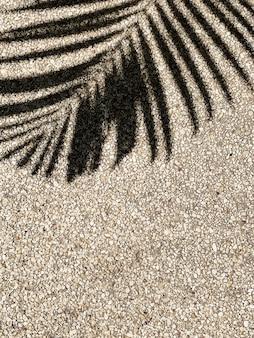 Piękny cień tropikalnej gałązki palmy kokosowej na piasku