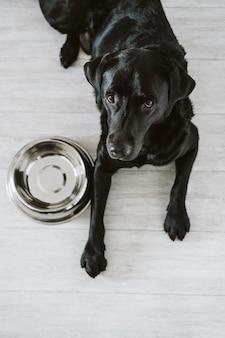 Piękny czarny labrador czeka jeść jego posiłek. dom, wnętrze