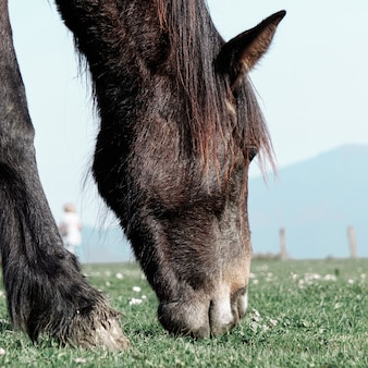 Piękny czarny portret konia na łące