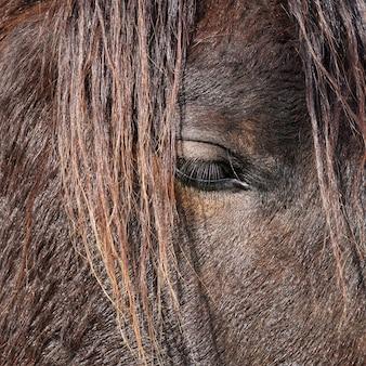 Piękny czarny portret konia w naturze