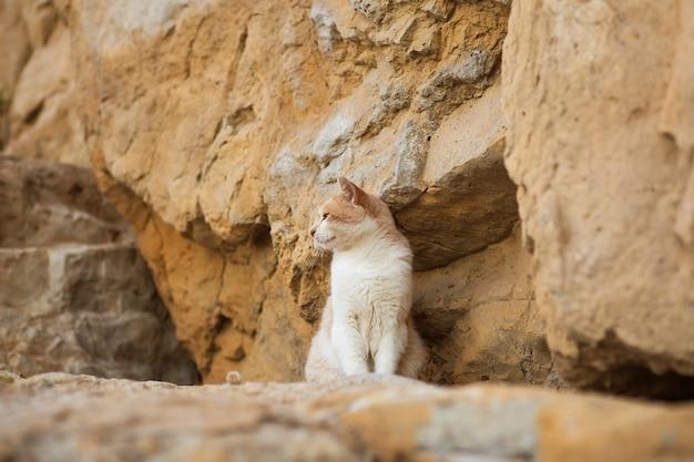 Piękny czerwony kot siedzi wśród skał.