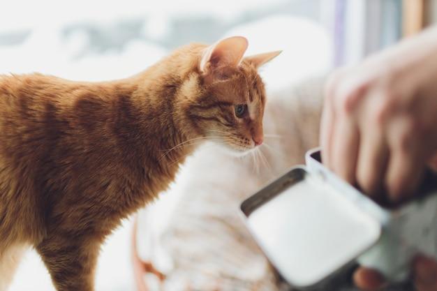 Piękny czerwony kot w centrum uwagi. oko kota.