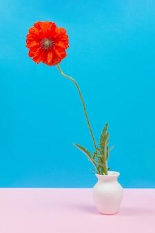 Piękny czerwony kwiat maku w białym dzbanku na niebieskim tle z miejscem na kopię