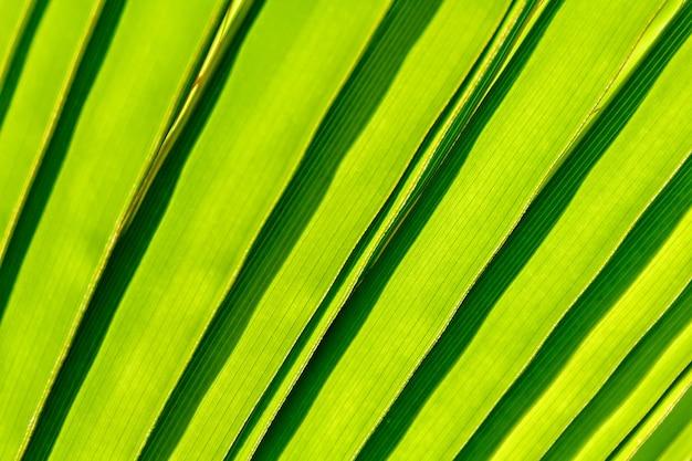 Piękny detal liścia palmowego
