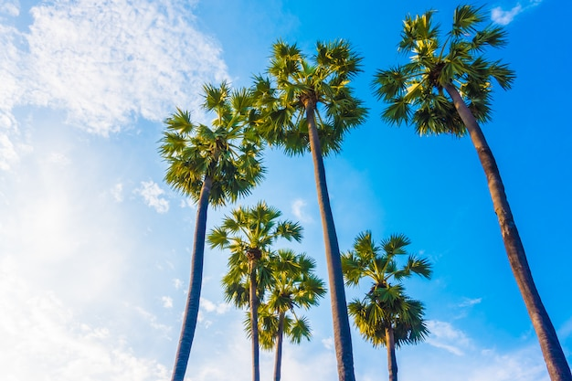 Piękny drzewko palmowe na niebieskim niebie