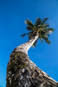 Piękny duży drzewko palmowe przy oceanem