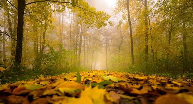 Piękny dywan z liści w malowniczym jesiennym mglistym woo