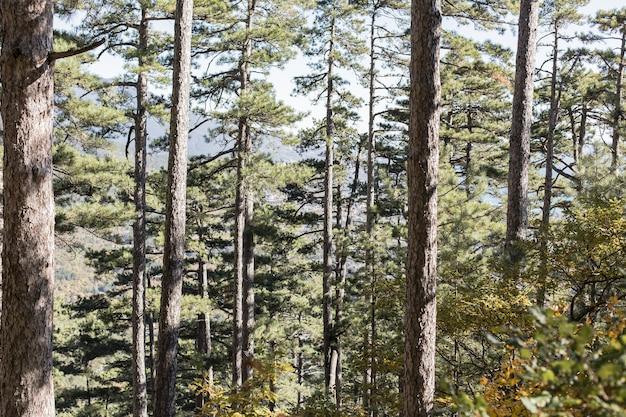 Piękny dzień na świeżym powietrzu w lesie