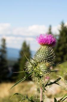 Piękny dziki kwiat z bliska
