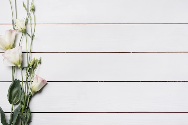 Piękny eustoma kwiat kapuje na białej drewnianej desce