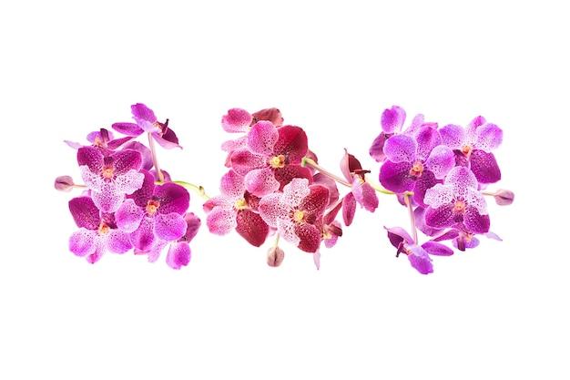Piękny fioletowy kwiat orchidei na białym tle na białym tle ze ścieżką przycinającą. kompozycja kwiatowa. kwiatowy wzór widok z góry lub płasko leżał projekt tła lato i natura.