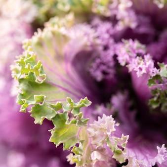 Piękny fioletowy kwiat w przyrodzie