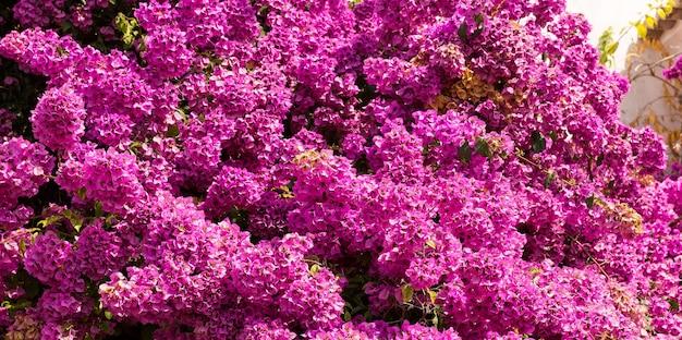 Piękny fioletowy liliowy w fakturze słonecznego dnia