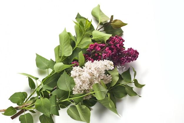 Piękny fioletowy liliowy