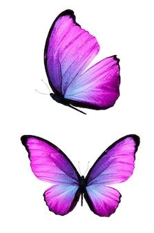 Piękny fioletowy motyl na białym tle