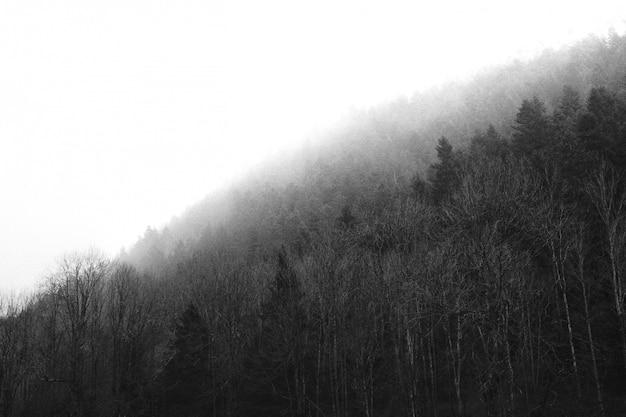 Piękny gęsty las z czystym białym niebem