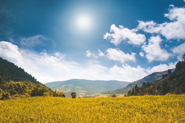 Piękny górski krajobraz w letni dzień. żółta łąka, bue niebo z chmurami i słońcem. tle przyrody. pole ryżowe rolnictwa w nepalu, trekking w himalajach. odkrywanie świata urody