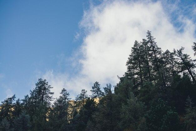 Piękny górski krajobraz z lasem w mrozie z widokiem na nasłonecznione złote skały pod chmurami w błękitne niebo. górskie krajobrazy z drzew iglastych w szron na tle skały w złotym słońcu.