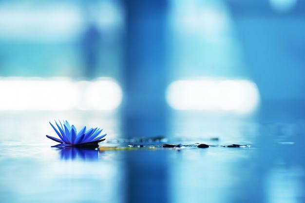 Piękny grążel lub lotosowy kwiat w stawie.
