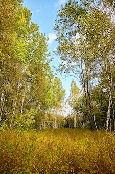 Piękny i kolorowy krajobraz jesień natura