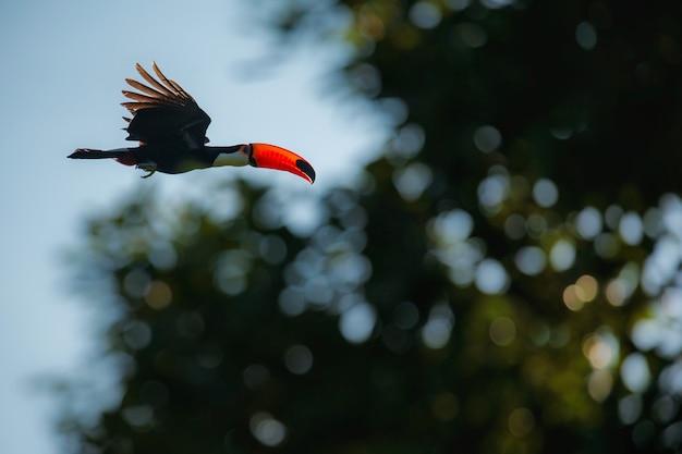 Piękny i kolorowy ptak w ładnym środowisku naturalnym