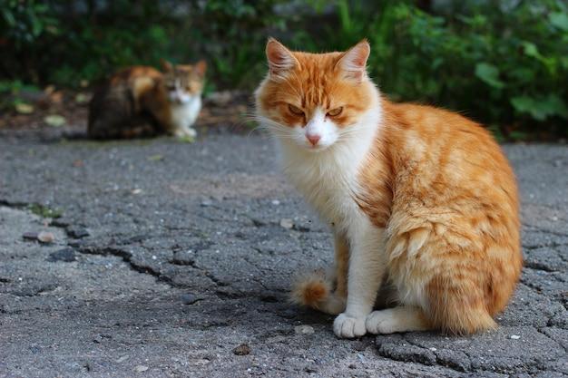 Piękny i smutny bezdomny kot