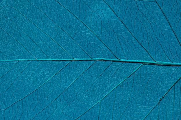 Piękny i szczegółowy liść makro