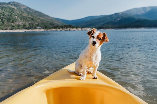 Piękny jack russell pies siedzi na żółtym kajaku w jeziorze w słoneczny dzień. czas letni. zwierzęta, przygoda i przyroda